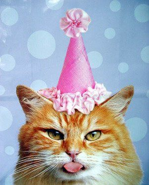Birthday hat kitty.jpg