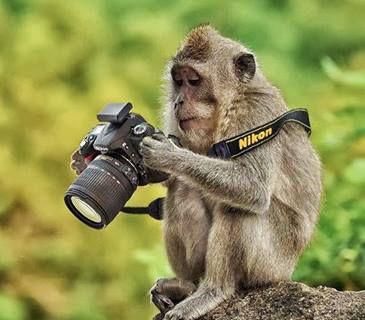 nikon monkey.jpg